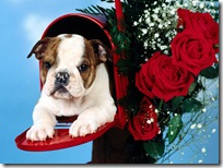 Dogs-wallpapers (154)