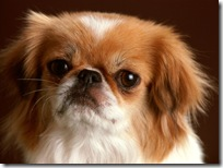 Dogs-wallpapers (152)