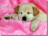 Dogs-wallpapers (150)