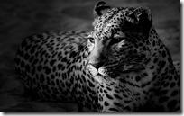 animal wallpapers (11)
