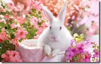 White easter bunny rabbit in a basket in a flower garden scene.