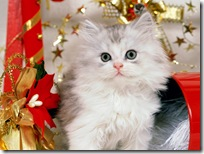 Christmas-new-year-wallpapers (27)