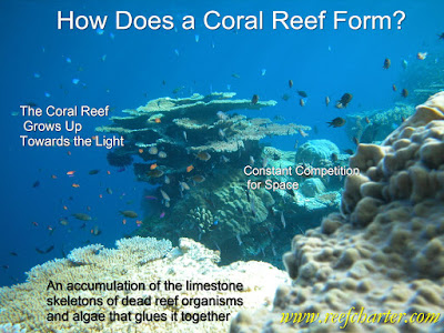 How Does a Coral Reef Form?