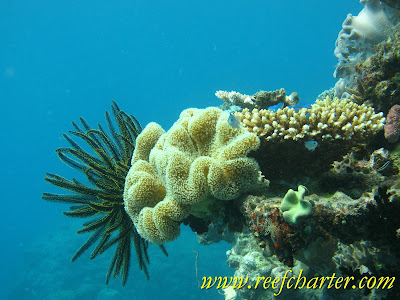The Beautiful Feather Star