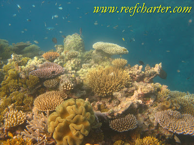 Beautiful Coral Gardens on the Great Barrier Reef