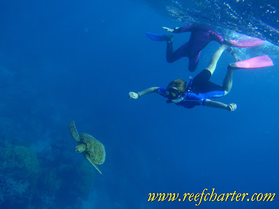 Snorkeling with a Turtle