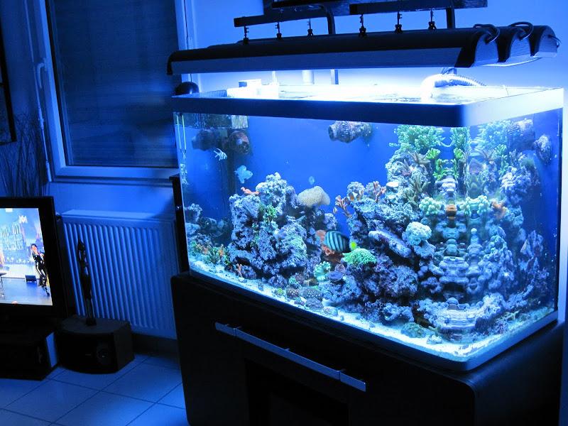 Forum r cifal finist rien afficher le sujet vend osaka 320 for Vend aquarium