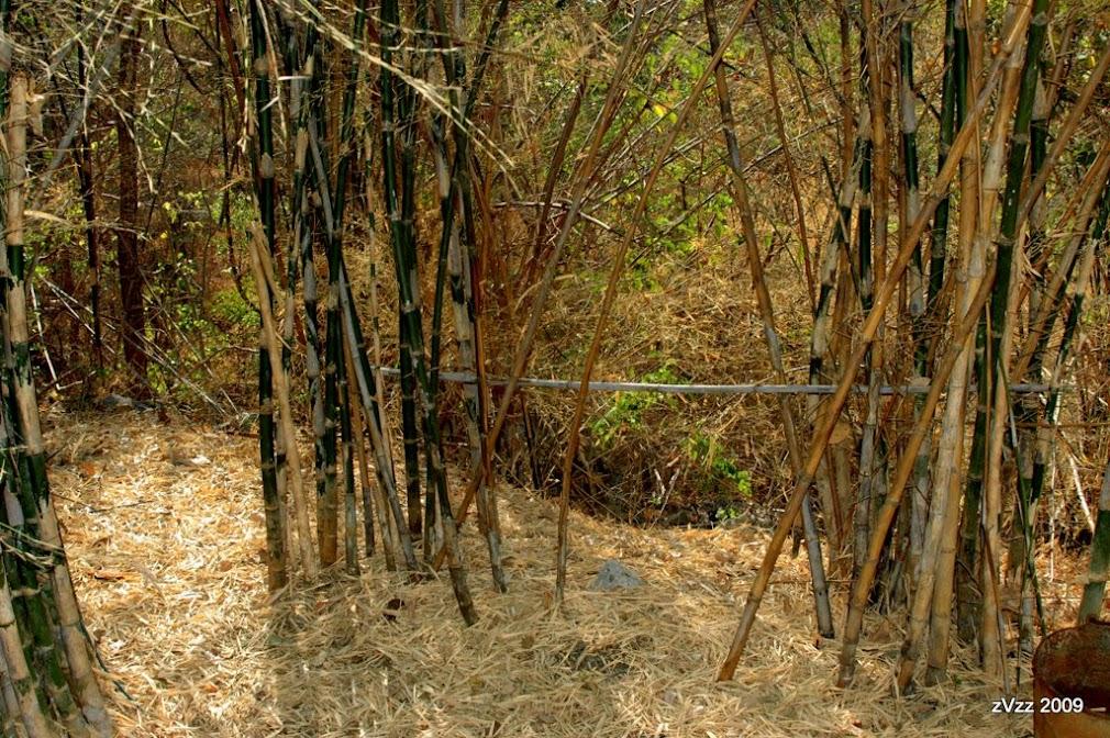Бамбук осыпает листья в горах Канчанабури