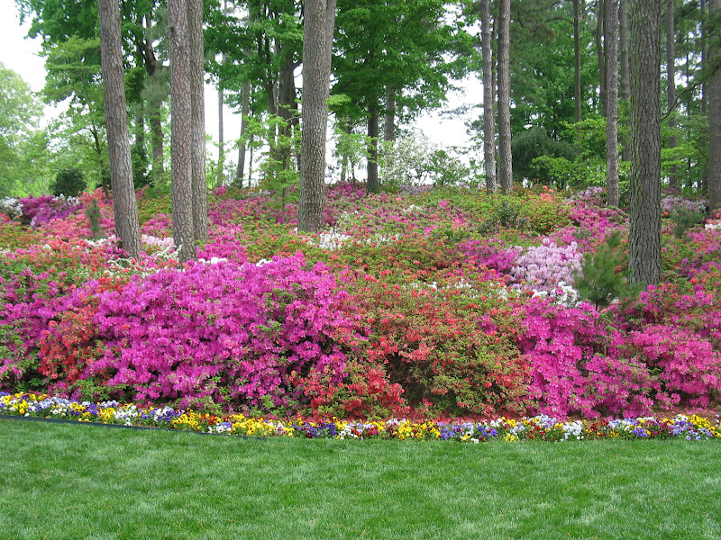 Wral gardens raleigh wedding garden place raleigh durham chapel hill cary north for Gardens in raleigh nc