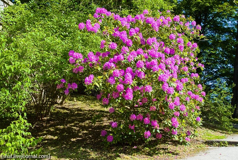 Розарий, замок Конопиште, Чехия | Rose garden, Konopishte castle, Czech Republic | Ružová zahrada, zámek Konopiště, Česká republika