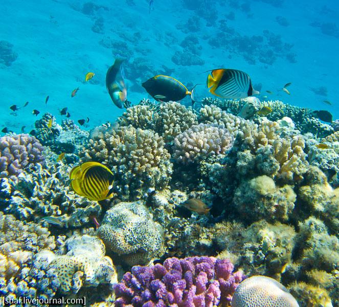 Египт, Макади Бэй, Красное море | Egypt, Makadi Bay, Red sea