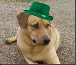 st patrick hat 2 crop