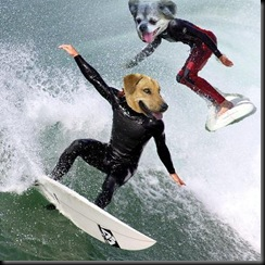 surf theme