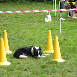Fun Dog Show - Saturday 22nd Oct 2011