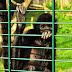 Zoo Landau - © info@dester.de