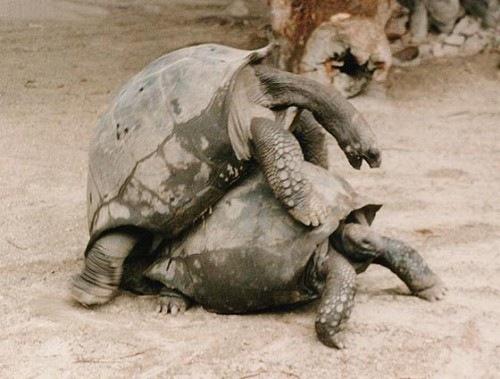 19-Amazing-Animals-Captured-While-Making-Love-011