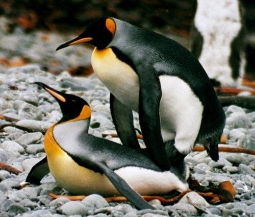 19-Amazing-Animals-Captured-While-Making-Love-005