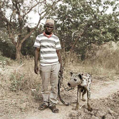Animais de extimação na África