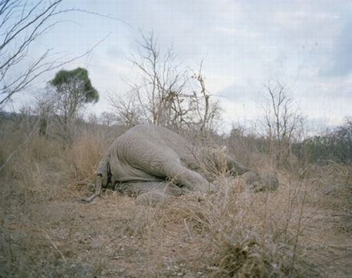 eat_elephant_01