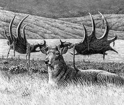 Alce irlandês ou cervo gigante (extinto cerca de 7.700 anos atrás)