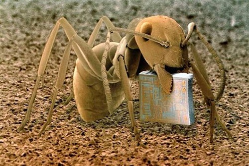 Uma formiga, em cima de um pedaço de madeira, carregando um microchip.