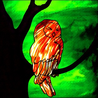 owl stained