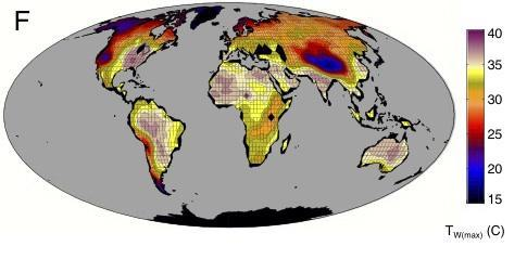 This map shows the maximum wet-bulb temperatures reached in a climate model from a high carbon dioxide emissions future climate scenario with a global-mean temperature 12 degrees Celsius (21 degrees Fahrenheit) warmer than 2007. The white land areas exceed the wet-bulb limit at which researchers calculated humans would experience a potentially lethal level of heat stress. (Credit: Purdue University graphic / Matthew Huber)
