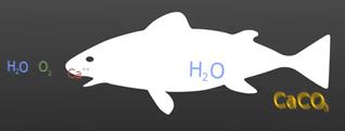 Fish Carbonate Animation