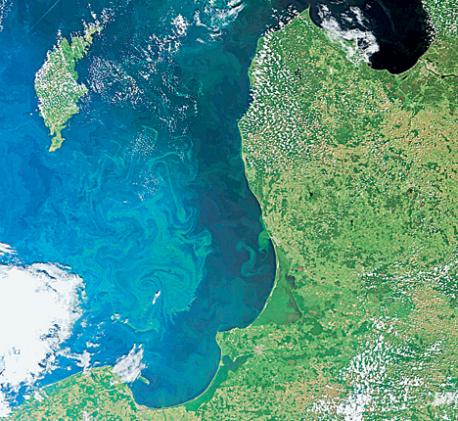 A satellite view of the Baltic, showing the carpet of blue-green algae that now covers an area the size of Germany. EPA