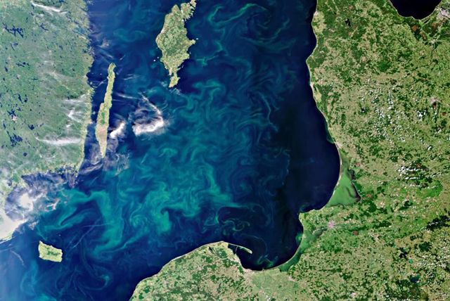 An image from the European Space Agency's Envisat satellite, released 24 July 2010, shows a vast blue-green algae bloom filling the Baltic Sea. Scientists say the potentially toxic bloom could pose a risk to marine life in the region.