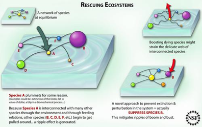 Rescuing ecosystems. Diagram by Zina Deretsky courtesy National Science Foundation via ens-newswire.com