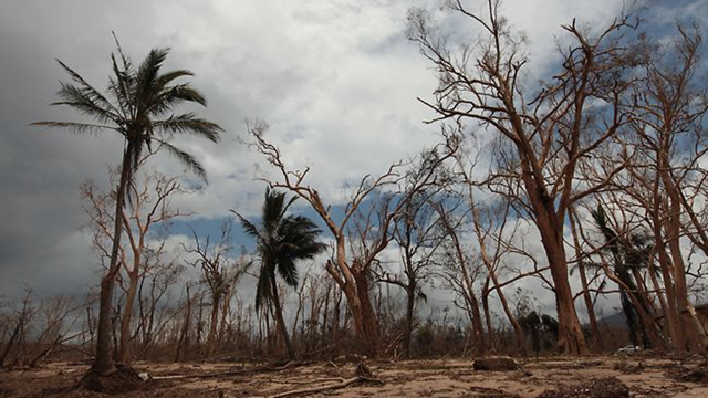 PARADISE LOST: Some of the devastation wrought by Cyclone Yasi when it hit Queensland's Heritage Listed natural assets. Rob Maccoll / The Courier-Mail