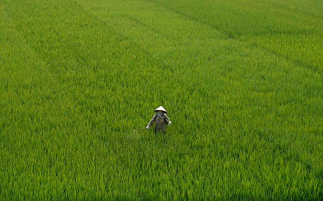 A farmer sprays pesticide on a rice paddy field outside Hanoi, 16 April 2009. Kham / Reuters