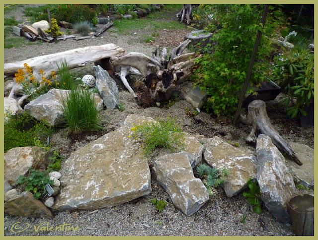Jardin alpin MiniRocailleJardinAlpin10%2006%2003_85RM
