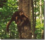 97 écureuil
