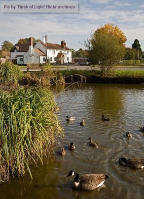 Hanley Swan Pond2