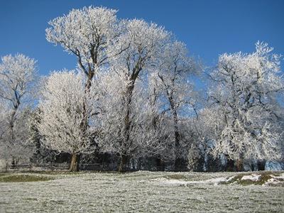 Muxton Marsh Nov, Dec 2010 068