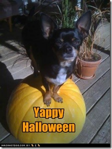 funny-dog-pictures-yappy-halloween