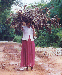 Fuelwood Collection Hyderabad India Credit D Barnes