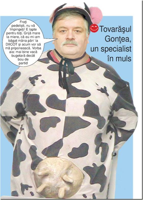 Gontea vaca