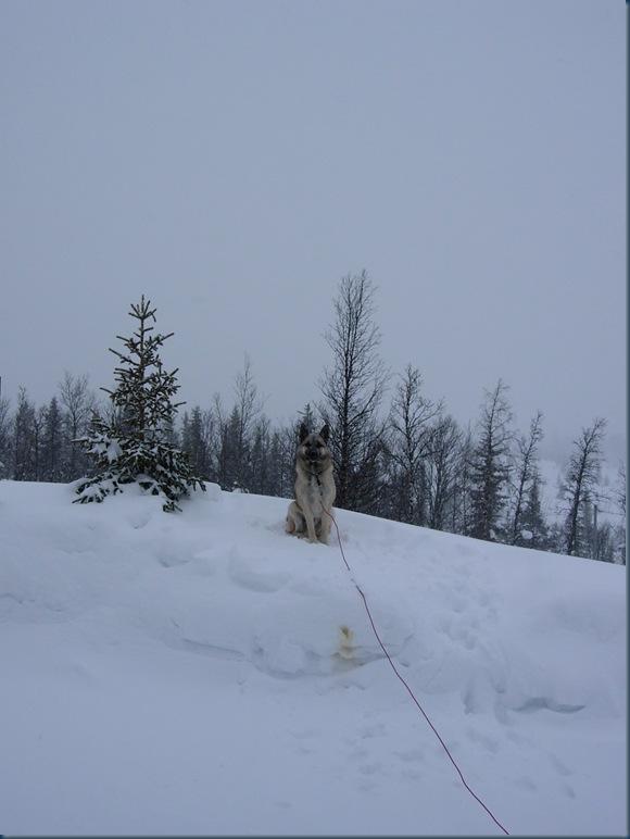 vinterf 012
