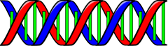 double_helix_DNA_T
