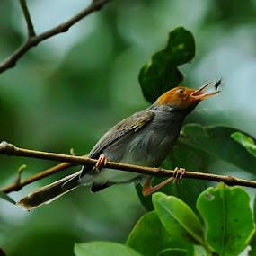 by Oji Kulup - Animals Birds