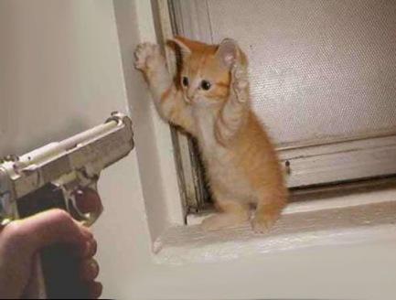 imagen gato levantando las manos