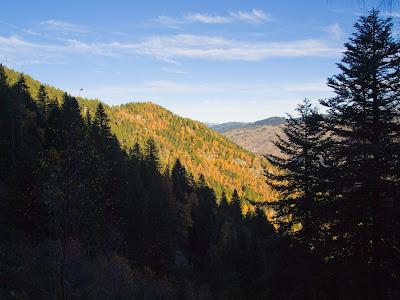 La primera part de la ruta transcorre dins d'un bosc espès