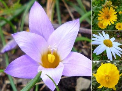 Ver flores alqueidão