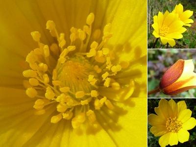 Ver flores amarelas montejunto