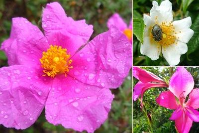 Ver flores roxas e brancas