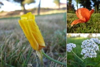Ver Flores Serra