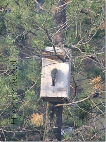 fugl i fuglekasse 1